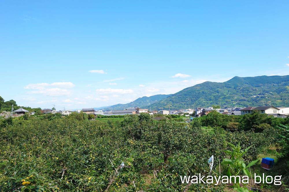宝来山神社 景色