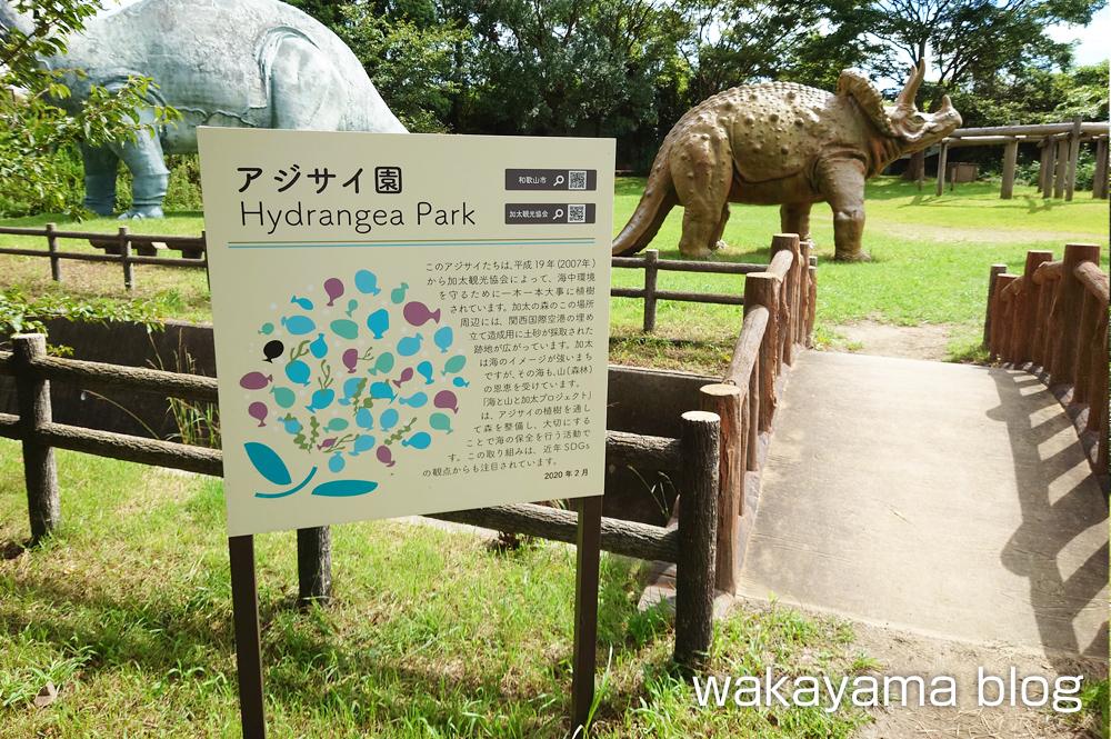 森林公園 和歌山市 アジサイ
