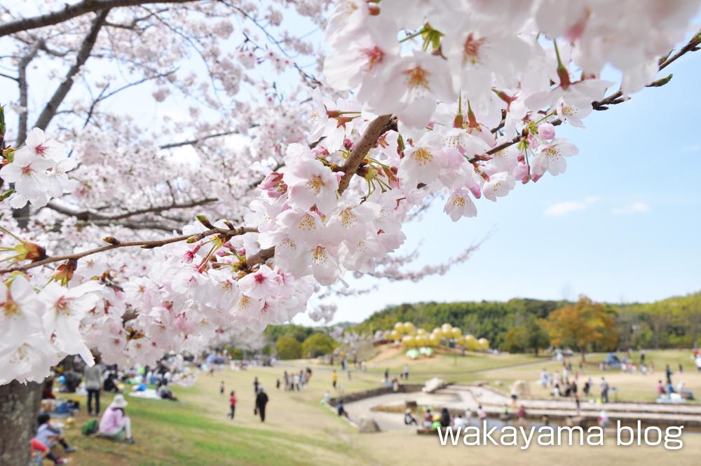 道の駅 四季の郷公園 桜 花見